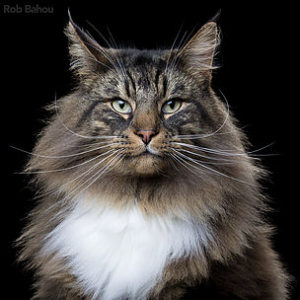 Dexter Portret