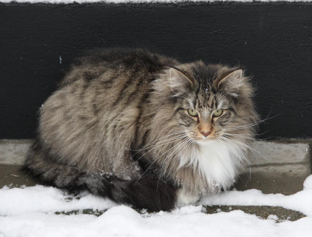 Lisa in de sneeuw