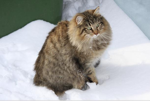 Smilla 2 in de sneeuw