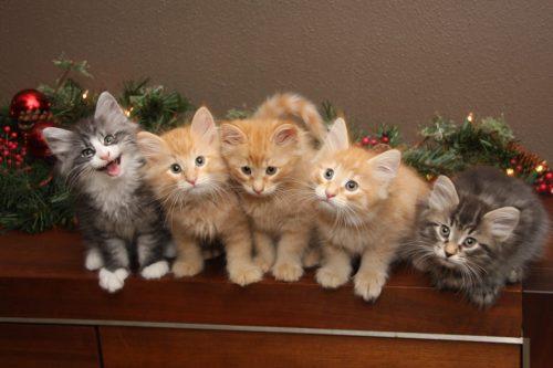 Kittens nestje 46 samen