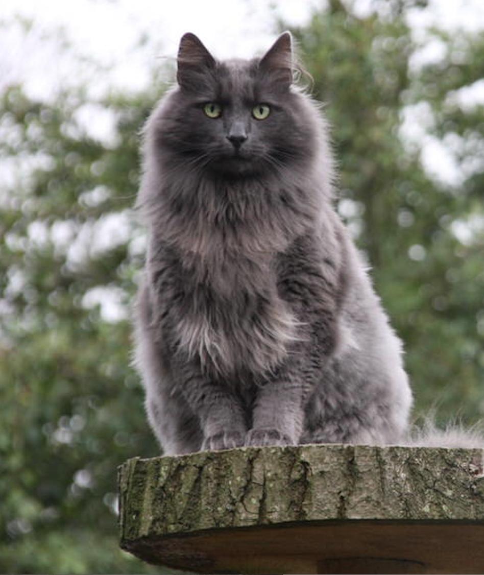 Morris op de boomstam in de tuin.