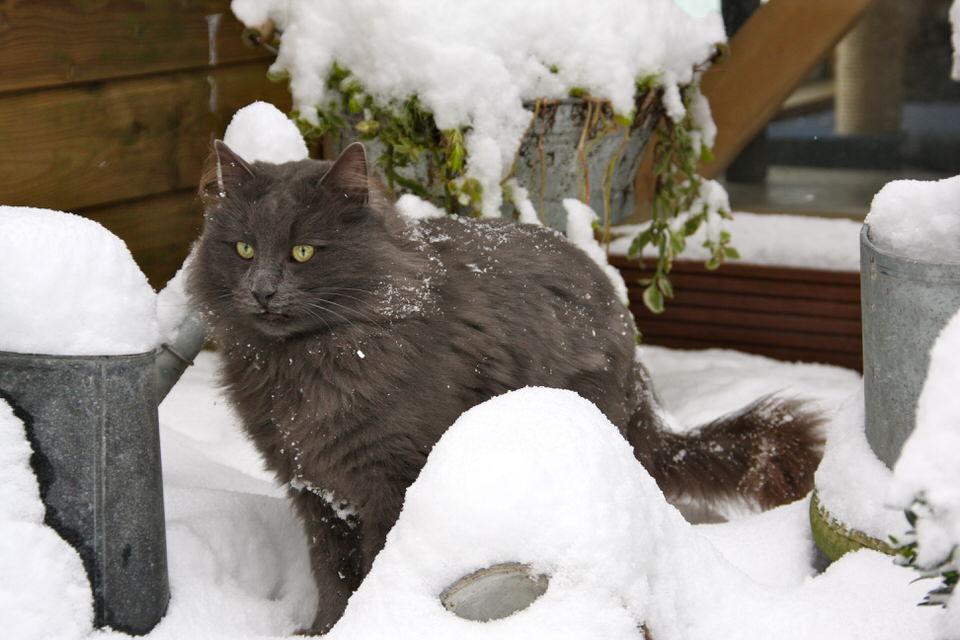 Morris geniet in de sneeuw.