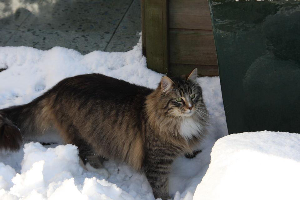 Murano heerlijk in de sneeuw.