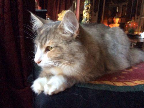 Lily op haar hoge troon.